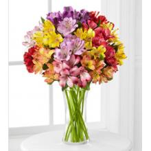 FK522 The FTD® Pick Me Up® Rainbow Discovery Peruvian Lily Bouquet
