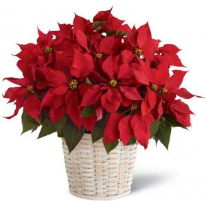 B13-3602 Le panier Poinsettia rouge de FTD® (grand)